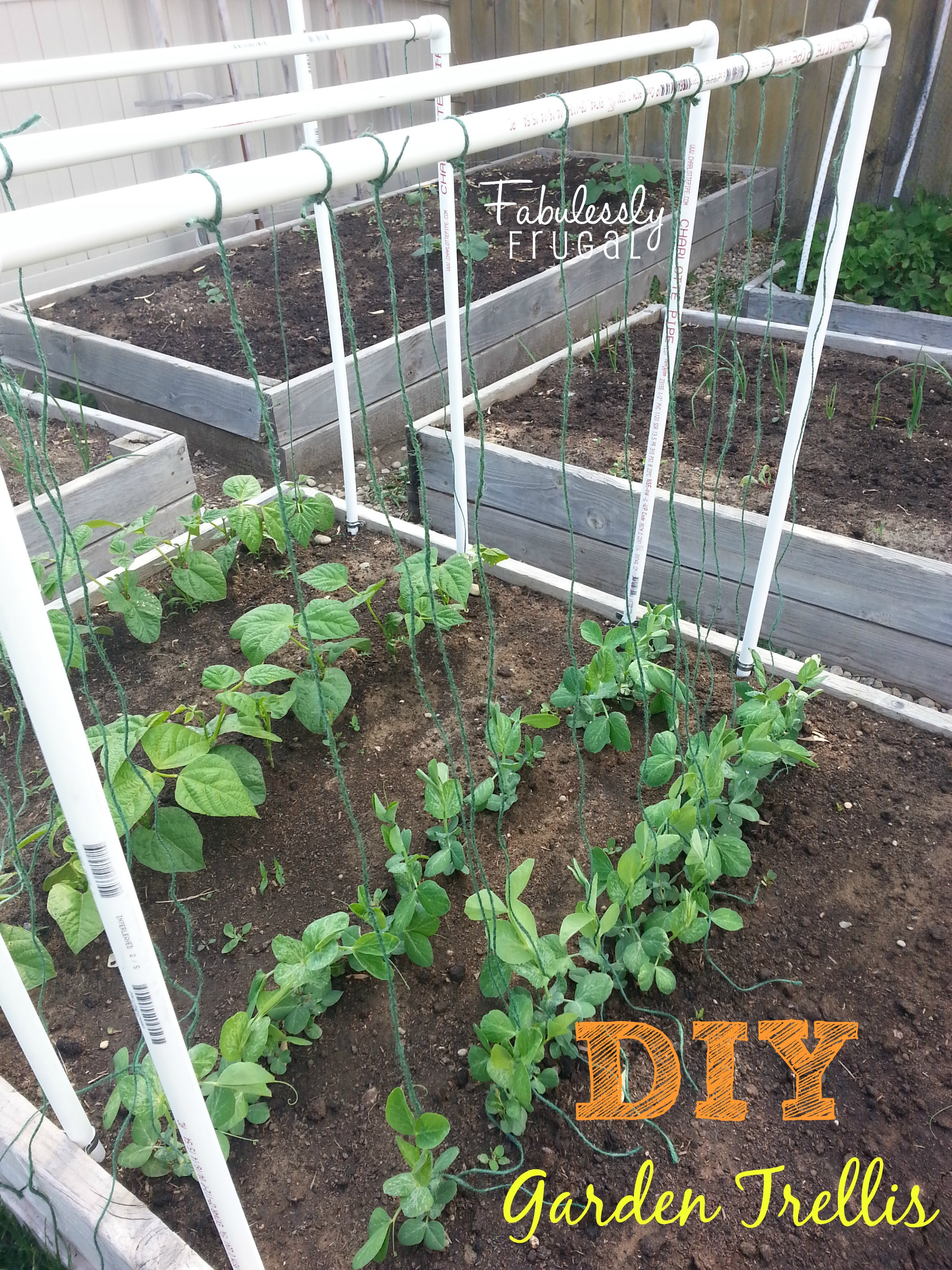 I Donu0027t Know About You, But My Garden Has Just Been Growing Like Crazy This  Past Week. I Have Waited To Put In A Trellis For My Beans And Peas Because  I ...